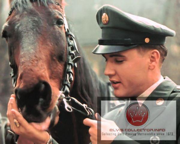WM Horse Army